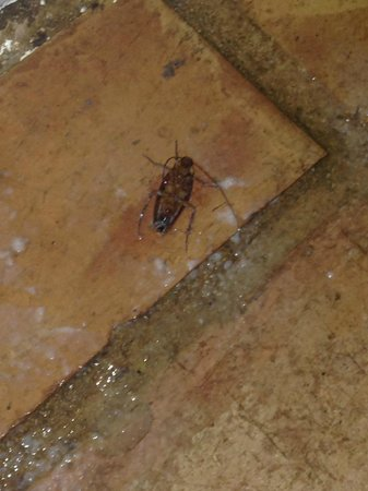 Sheffield House Bed & Breakfast : 1/4 roaches killed-different angle  (from third night) @ bedroom floor