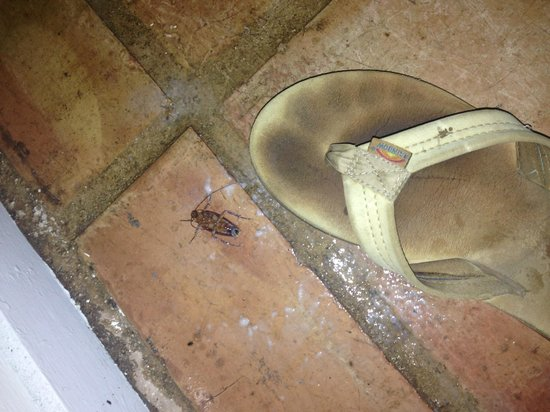 Sheffield House Bed & Breakfast: 1/4 roaches killed (from third night) @ bedroom floor