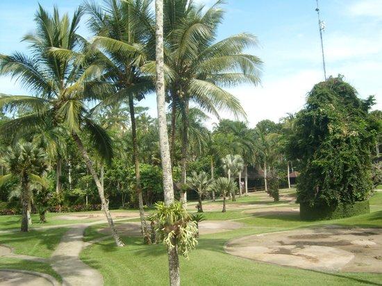Mason Elephant Lodge: Garden