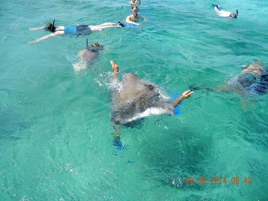 Xanadu Island Resort : Snorkeling at Shark Ray Alley