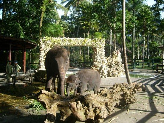Elephant Safari Park & Lodge: Nursery