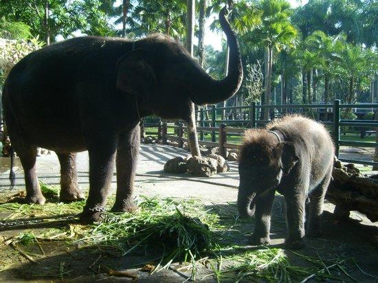 Elephant Safari Park & Lodge: Mom and baby
