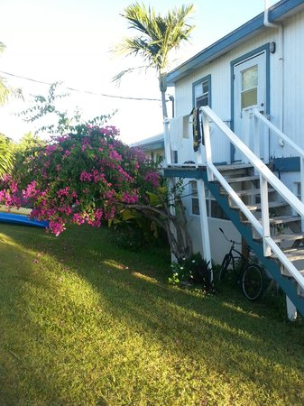 Surfers Haven Guesthouse: garden