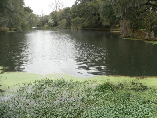 Charles Towne Landing State Historic Site: Lovely pond with alligators