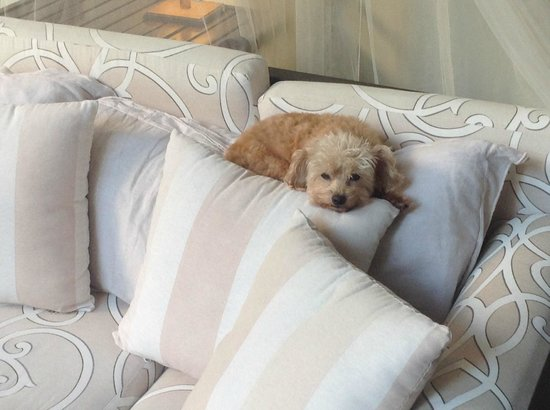 Hotel Villa Verde Merida : Archie - the resident star poodle
