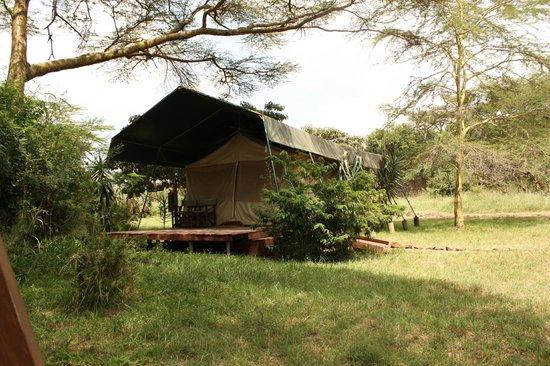 Porini Mara Camp: tent