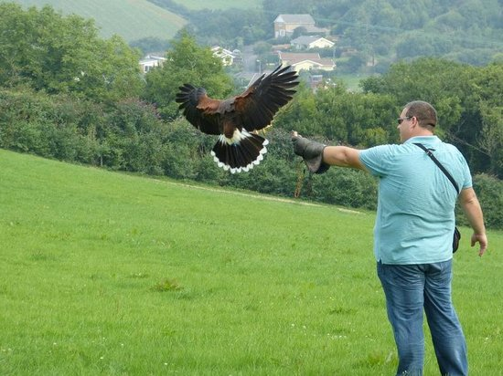 Adventure Falconry: Perfect landing