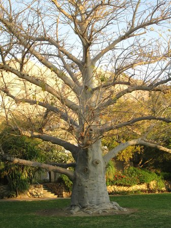 Ein Gedi Hotel: Beautiful tree in botanical garden