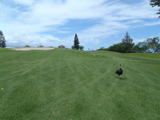 Waikoloa Village Golf Club : #5