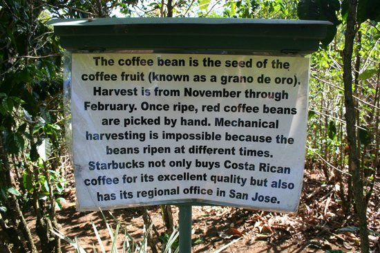 Hotel Buena Vista: Coffee trail