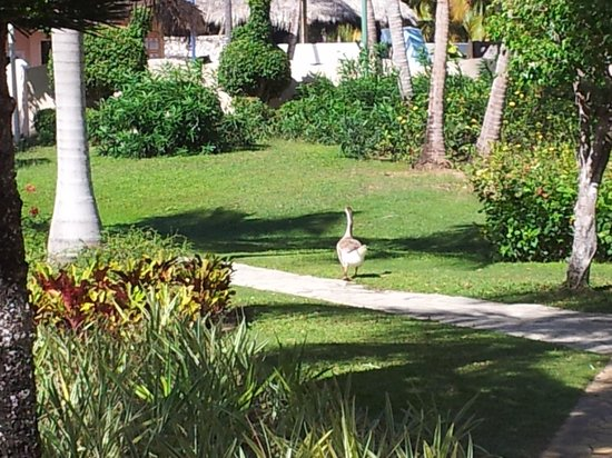 Catalonia Bavaro Beach, Casino & Golf Resort : Jardines impresionantes