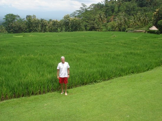 Amanjiwo Resorts: Rice fields as seen from Villa 23 at Amanjiwo Hotel in Borobudur