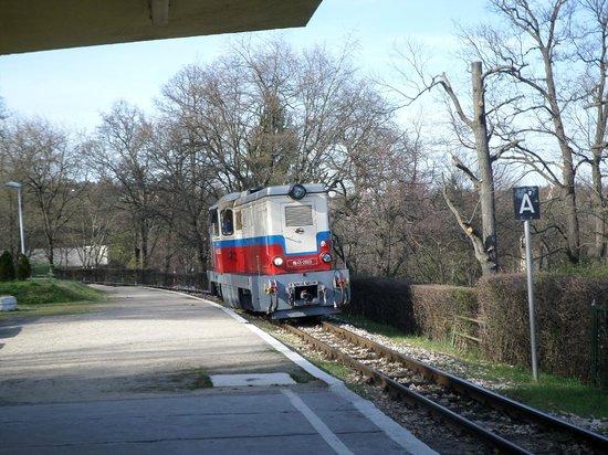 Children's Railway, Budapest : Train