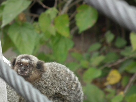 Rio Tours Operator: Monkey on Sugarloaf