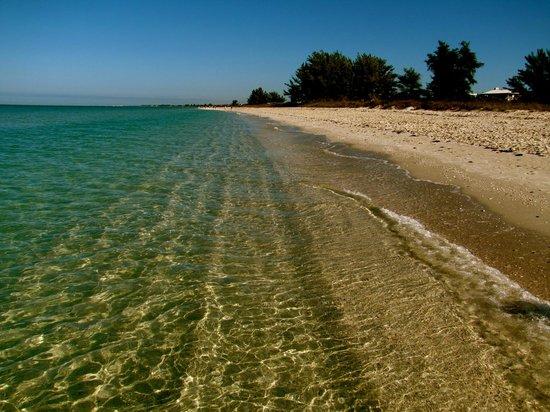 The Beachcomber: Low tide