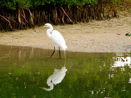 The Beachcomber : Egret across the canal
