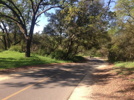 American River Bicycle Trail : wide tree-lined bike trail