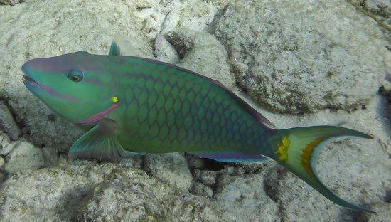 Keys Diver Snorkel & Scuba: The Colorful Florida Keys!!
