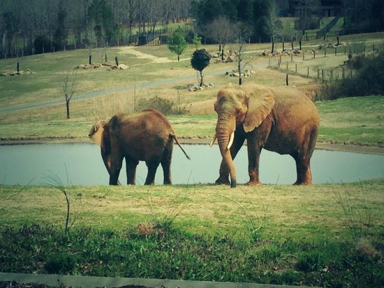 North Carolina Zoo: Elephants at the zoo!