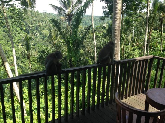 Alila Ubud: Drop ins to my new office