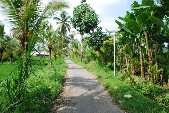 Nandini Jungle Resort & Spa Ubud: Path to the jungle near Susut village