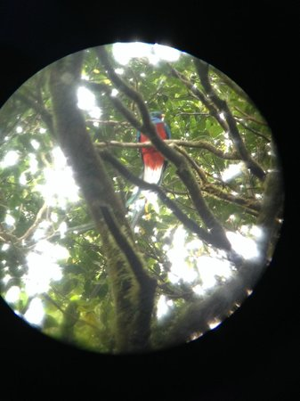 Pasion Costa Rica: The amazing Quetzal, seen from Marcos scope.