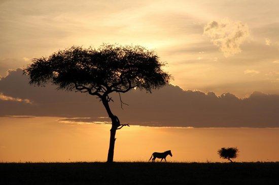 Encounter Mara, Asilia Africa : Fin de game drive
