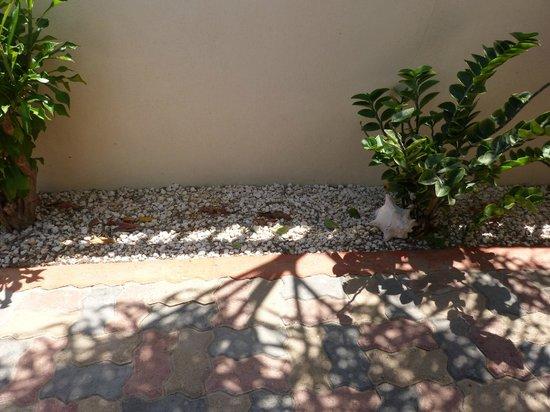 Little Paradise Aruba Vacation Apartments : el jardin