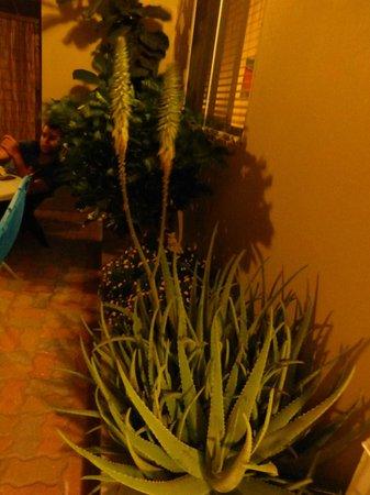 Little Paradise Aruba Vacation Apartments : los hermosos canteros que rodean los apartamentos