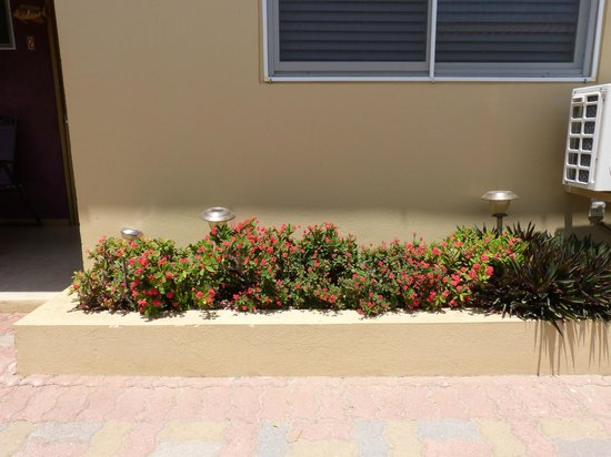 Little Paradise Aruba Vacation Apartments: mas canteros