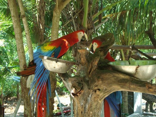 Petit Lafitte: animal sanctuary