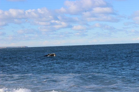 Playa El Doradillo: Saliendo a respirar en el mar azul de Puerto Madryn