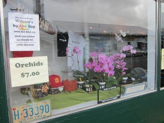 Wilson's by the Bay: stuff for sale in Wilsons window