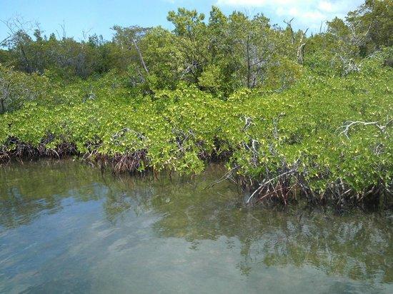 Six Senses Cayman Adventures : Red Mangrove Forest