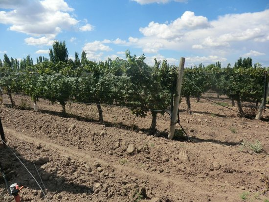 Chez Gaston Restaurant at Algodon Wine Estates: Viñedo