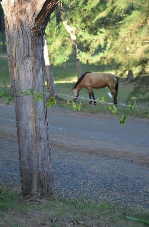 Hix Island House: Horse just hangin out on property
