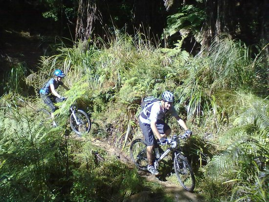 Sandy Rose Bed & Breakfast : Mountain biking - gear and guides can be arranged for your level