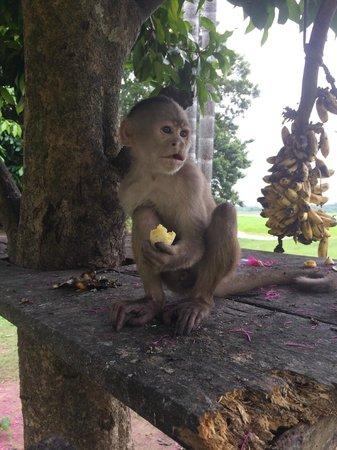 Maniti Expeditions Eco-Lodge & Tours Iquitos : Monkey Island