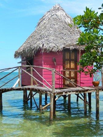 Urraca Private Island : Our cabin