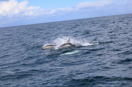 Bruny Island Cruises : Dolphins!