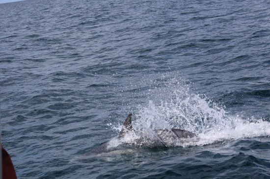 Bruny Island Cruises : Spotted!
