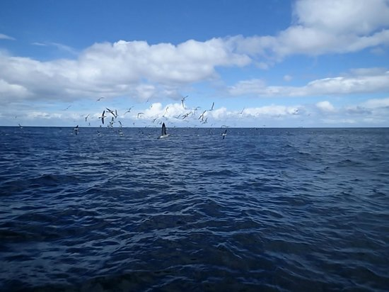 Bruny Island Cruises : Albatross