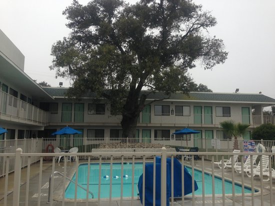Motel 6 Atascadero: large shade tree beside pool area