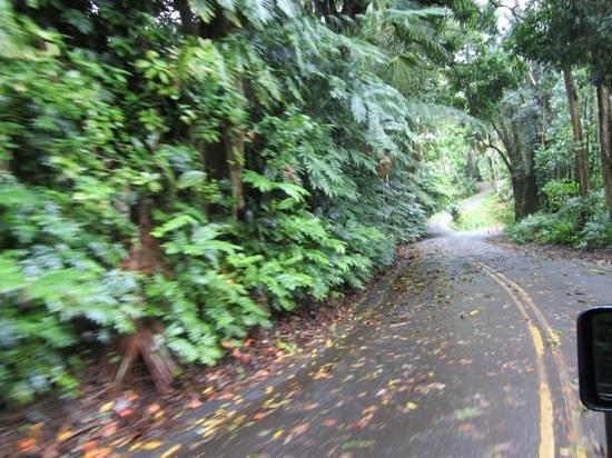 Pepeekeo Scenic Drive : scenic drive