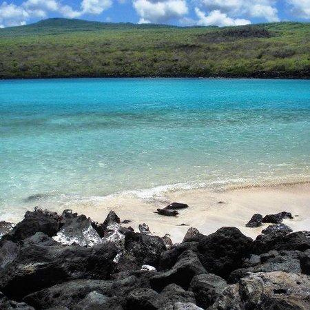 Isla Lobos