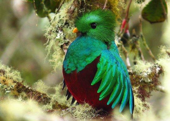 Hotel La Palapa Eco Lodge Resort: The famous Quatzar bird on the Serra de La Muerte only 1:30 hours from La Palapa.