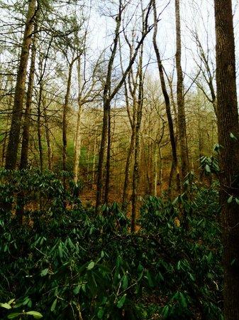 Enota Mountain Retreat : Pretty trees on the property.