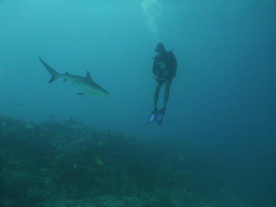 Ocean Explorers Dive Center : So liberating