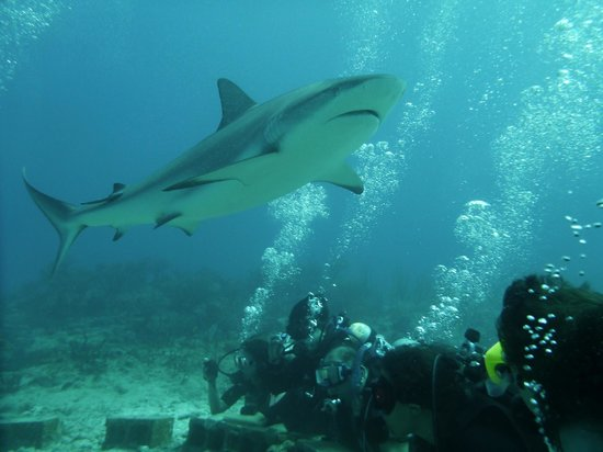 Ocean Explorers Dive Center : Come sharky sharky