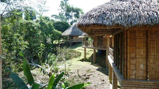 La Selva Amazon Ecolodge : Nette Cabanas